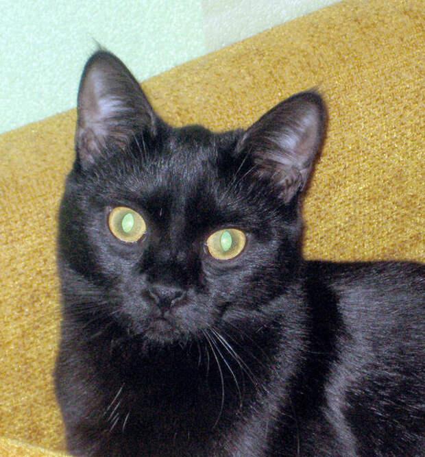 Беременную кошку выбросили в подвал… Один парень спас её потомство, и оно оказалось ошеломительным!