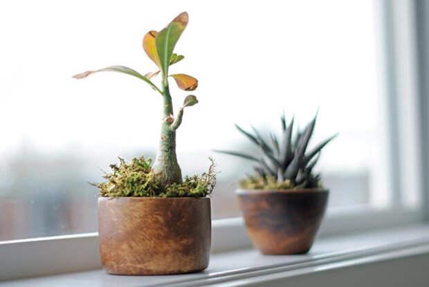Способность растений приспосабливаться к условиям содержания не безгранична