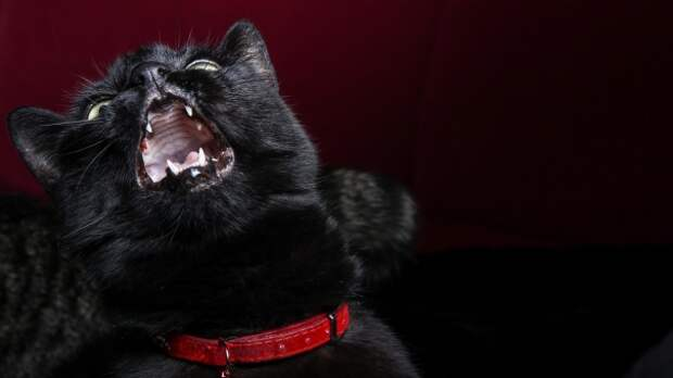 В Симферополе ввели карантин из-за бешеной кошки