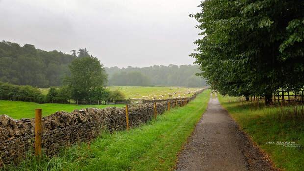 Раннее утро, по дороге из Бибури в соседнюю деревню Колн Сент Олдуин (Coln St.Aldwyn)