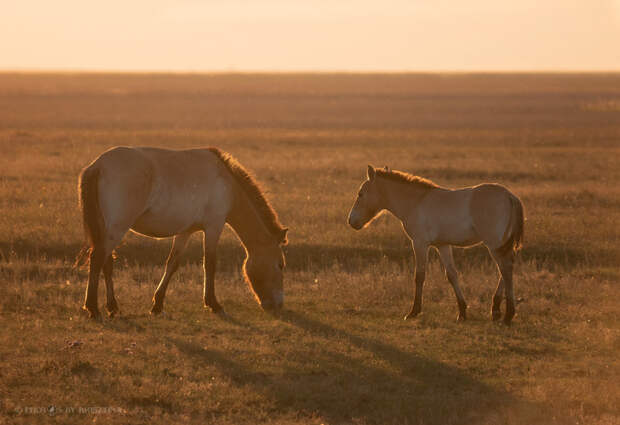 Family time 🐎 :)  by Krisztina M on 500px.com