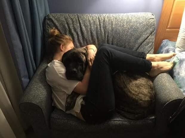 Прощание с любимой собакой прощание, собака, хозяйка