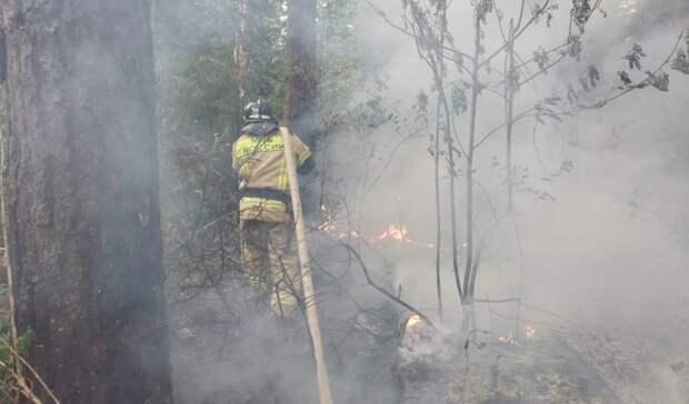 В национальном парке «Нечкинский» продолжают тушить крупный пожар