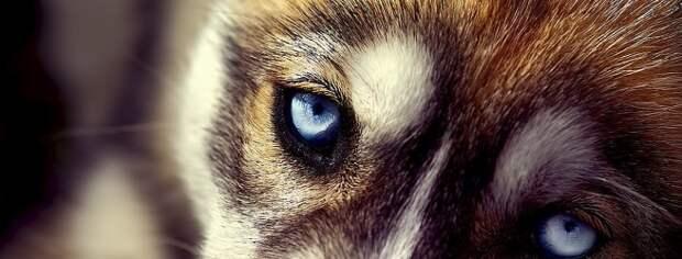 Собачий взгляд