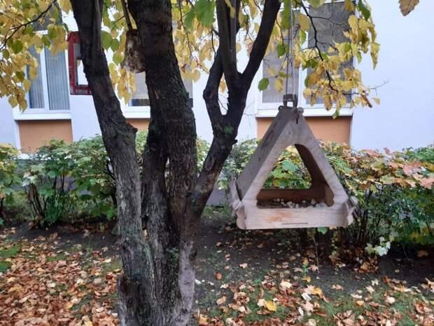Фото дня: птичьи домики на улице Софьи Ковалевской
