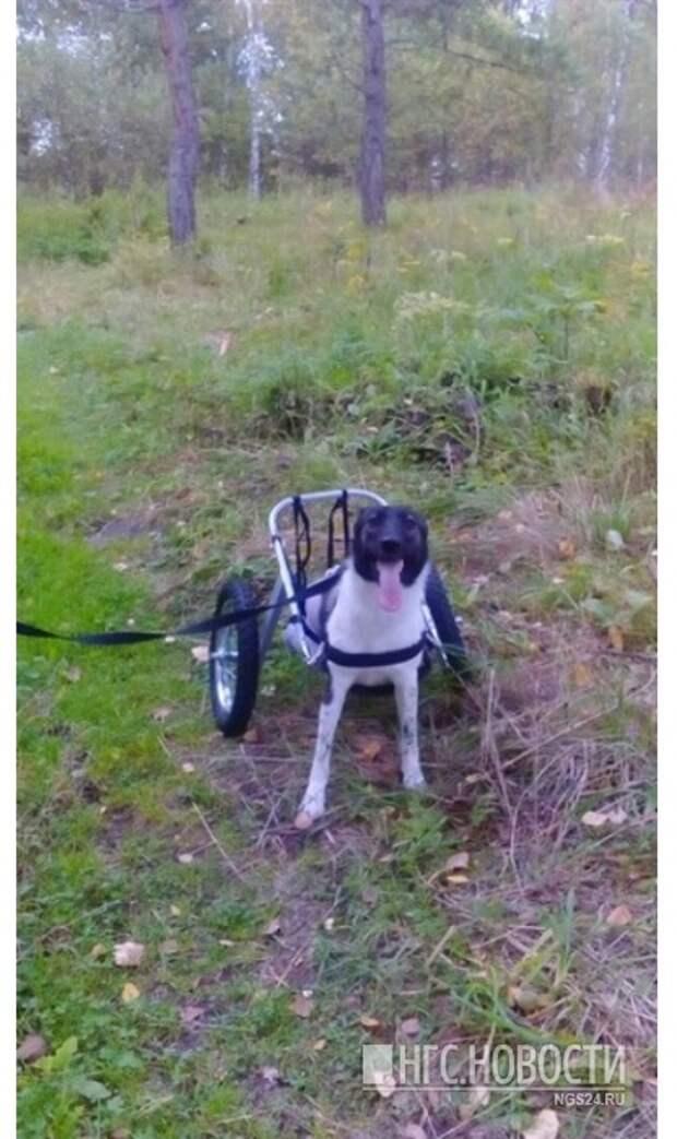 На новой коляске Белка уже ходила в лес за грибами