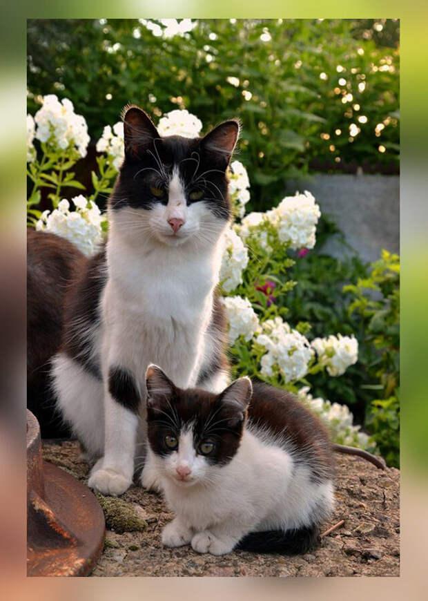 10 фото-доказательств того, что кошки могут сделать свою точную копию