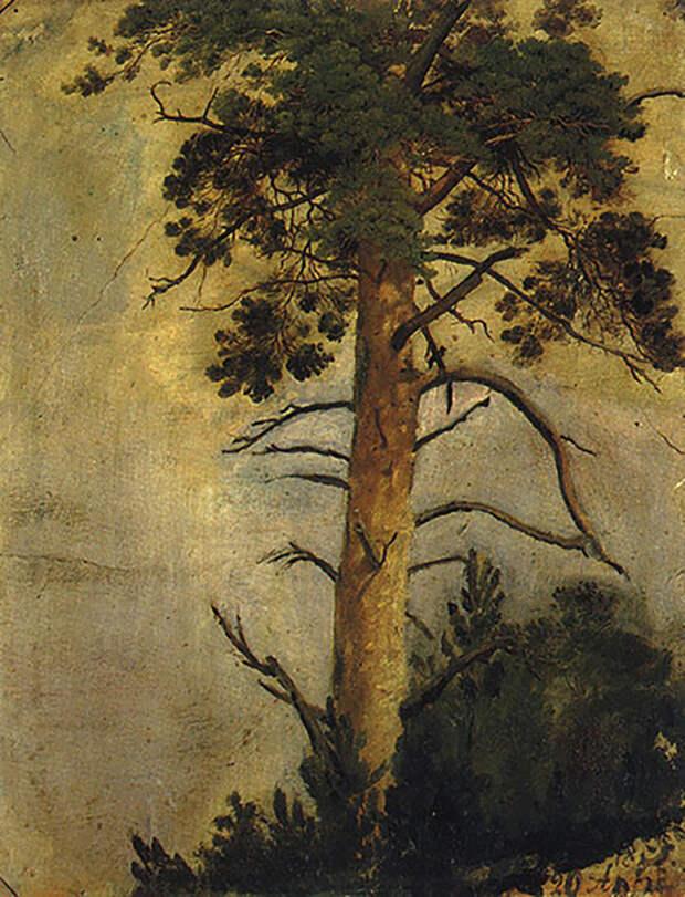 Все оттенки леса на картинах Шишкина