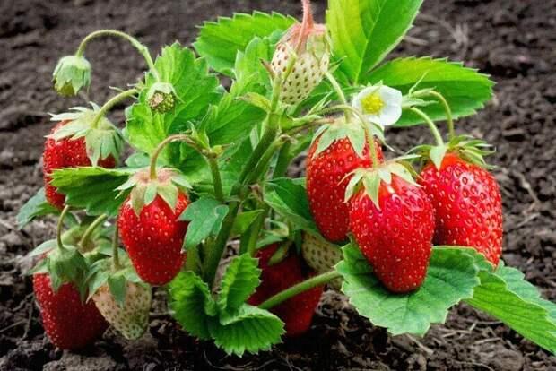 Подкормка для будущего урожая.