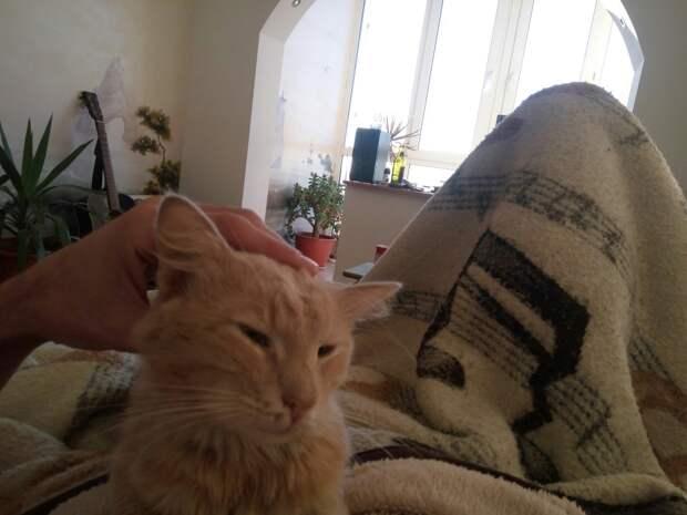 Спас кота от голодной смерти на холоде