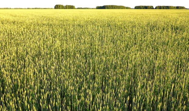 В Оренбуржье засеяли почти 800 тысяч гектаров пашни