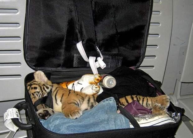 Контрабанда экзотических животных: наглость этих людей не имеет границ
