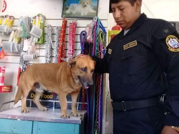 Скитаясь по улицам, измученный пес добрел до полицейского отделения, где ему предложили «работу» и дом