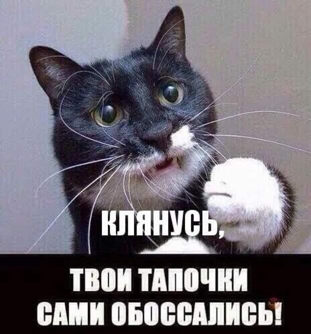 Украинский кот. Сами себя обстреливают…