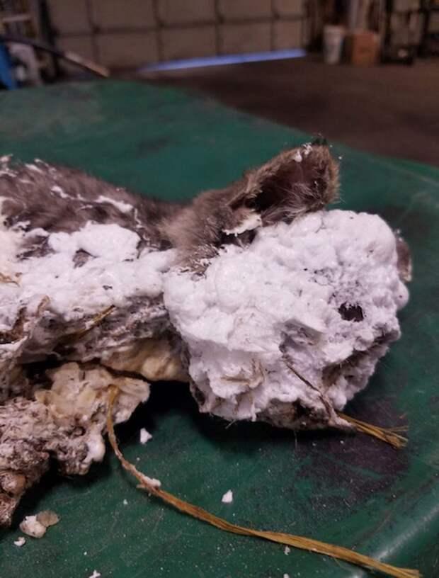 Нелюди измазали котенка строительной пеной и бросили умирать