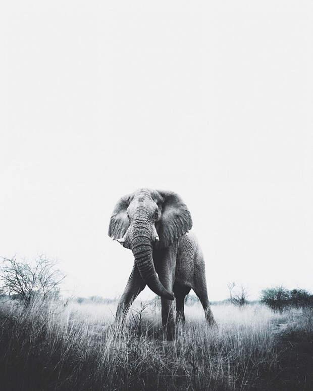 Когда дикая природа вызывает восторг. Фотограф Донал Бойд 70