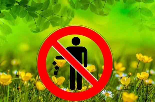 Не мусорить. Фото: pixabay.com