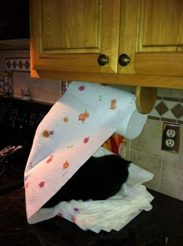 16. Бумажные полотенца? Только для использования на усмотрение вашей кошки Кошка в доме, домашние животные, забавные фото с котами., кошка, кошки, фото кошек, хозяева животные, юмор