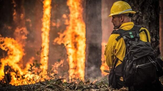 Пожарный эксперт рассказал о правилах безопасного отдыха в лесу