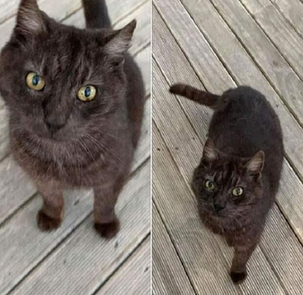 Кота выбросили в мусорный бак, а он взял и убежал в неизвестном направлении