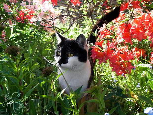 Кошки от фотографа Raven Montoya