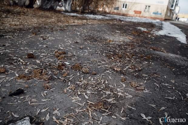 Весенние открытия:  что кемеровчане сделали с городом за зиму