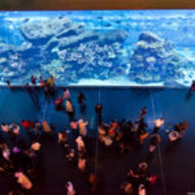 Аквариум и подводный зоопарк в Дубай Молл