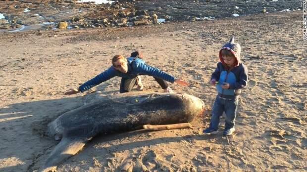 Заморская гостья: огромную рыбу, обитающую в Австралии, нашли на калифорнийском пляже