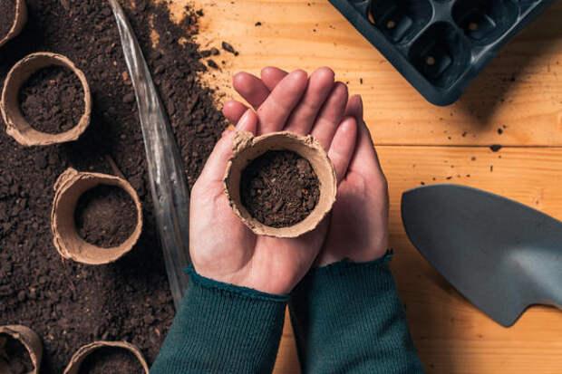 Почва для выращивания огурца должна быть питательной и хорошо проницаемой