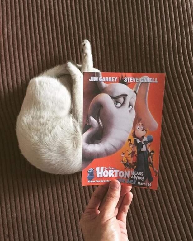 Фотограф гоняется за котами, чтобы сделать их героями кинокартин Джимми Чунг, животные, забавно, коты, милота, постер