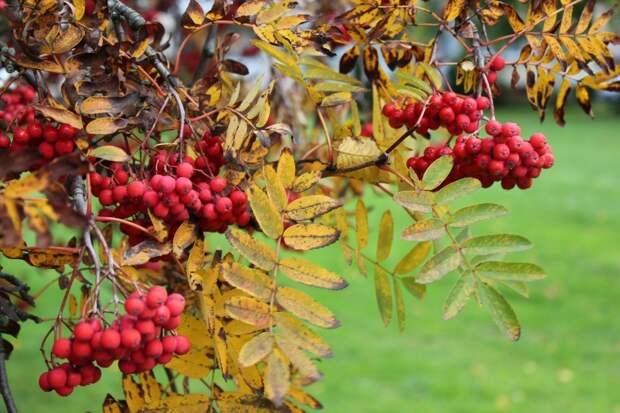 Начало октября в Удмуртии будет теплым