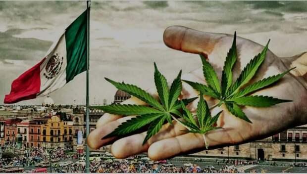 Мексика опубликовала план легализации медицинского каннабиса.
