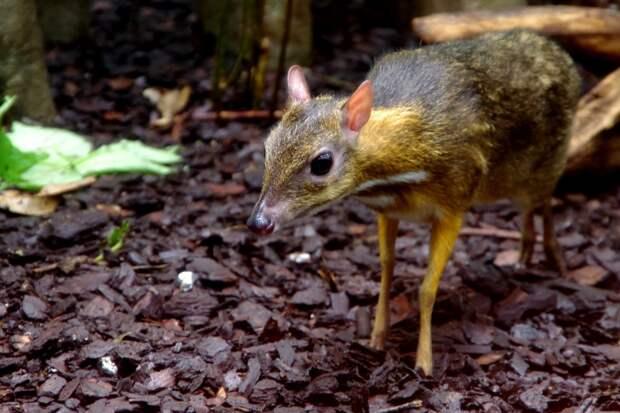 20 уникальных видов животных, о которых мы и не слышали