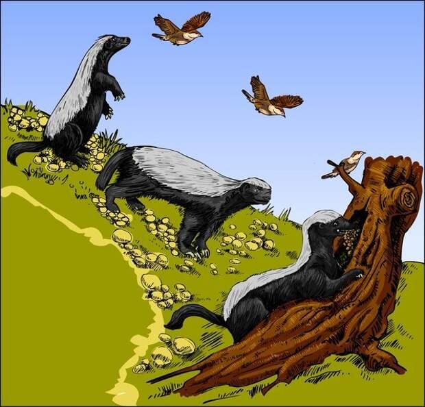 Медоуказчик – коварная птица, ведущая людей на смерть!