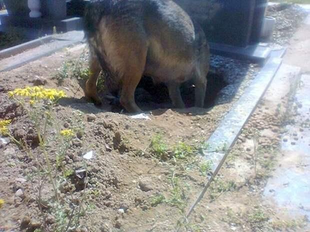 Все думали, что эта собака скорбит по своему хозяину, пока не увидели, что находится под ней.