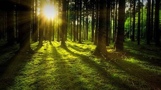 В двадцати районах Удмуртии ввели запрет на посещение лесов