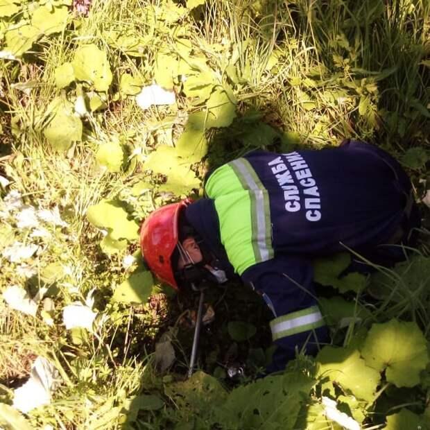 В Сарапуле спасли застрявшую в ливневой трубе собаку