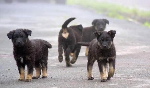 ВРостовской области идет профанация программы обращения сбездомными животными