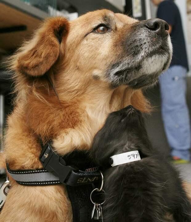 Пёс Бутс который работает кошачьей няней-8