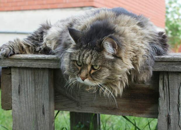 Ревность ревностью, а ребенок важнее: как Алёнин кот хозяйкиного сына от шакала спас