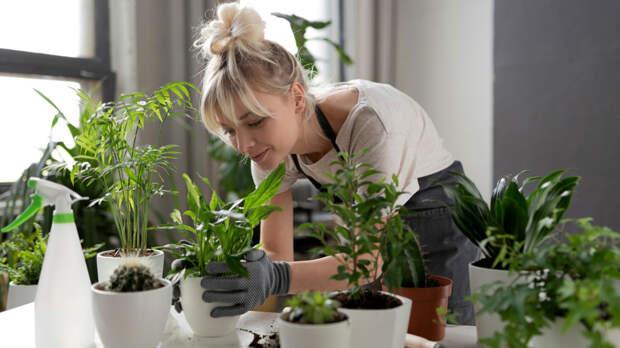 Как сберечь растения во время отъезда: простые решения