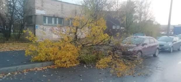 Петербург накрыл шторм: горожане поделились кадрами ущерба от стихии в социальных сетях