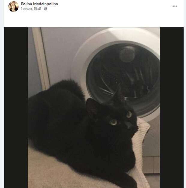 Черный кот предпочел чердак квартире дома на Ленинградке