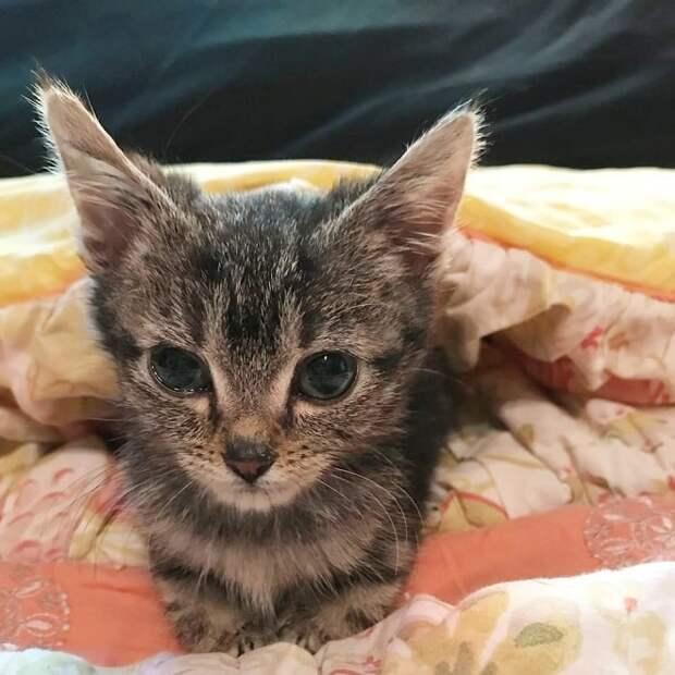 «Котенок навсегда»: малышка Коа родилась больной, но хуже всего было то, что она не может вырасти…