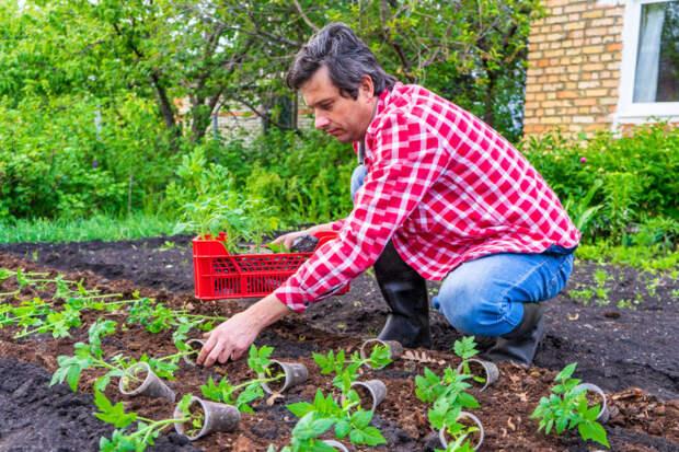 Как защитить урожай на даче от птиц-вредителей