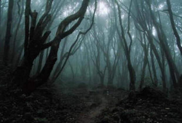 Дзюкай - обитель призраков