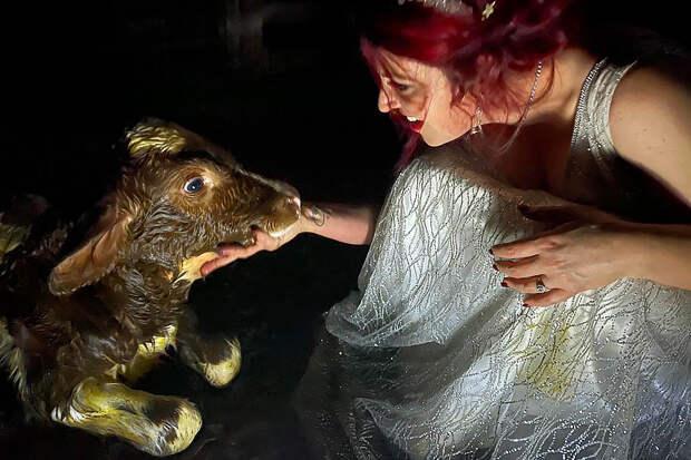 Жительница Австралии приняла роды у коровы на собственной свадьбе