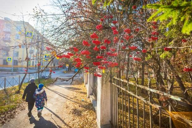 Последний день тепла в Новосибирске в октябре-2021 назвали синоптики