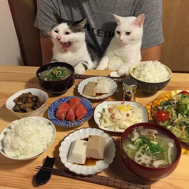 Вы правы, мусье, мясных блюд категорический дефицит сегодня дегустация, еда, животные, кот, коты, позитив, реакция, юмор