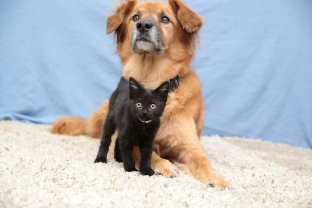 Пёс Бутс который работает кошачьей няней-6